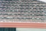 Na krovu se razvija plesan ili buđ